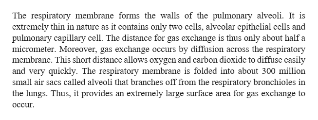 The respiratory membrane forms the walls of the pulmonary alveoli. It is extremely thin in nature as it contains only two cells, alveolar epithelial cells and pulmonary capillary cell. The distance for gas exchange is thus only about half a micrometer. Moreover, gas exchange occurs by diffusion across the respiratory membrane. This short distance allows oxygen and carbon dioxide to diffuse easily and very quickly. The respiratory membrane is folded into about 300 million small air sacs called alveoli that branches off from the respiratory bronchioles in the lungs. Thus, it provides an extremely large surface area for gas exchange to occur