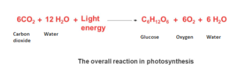 6CO2+12 H2O+Light energy C&H120602+ 6 H,O Carbon Water Water Glucose Oxygen dioxide The overall reaction in photosynthes is