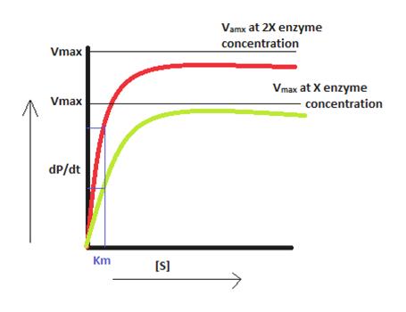 Vamx at 2X enzyme concentration Vmax Vmax at X enzyme Vmax concentration dP/dt Km