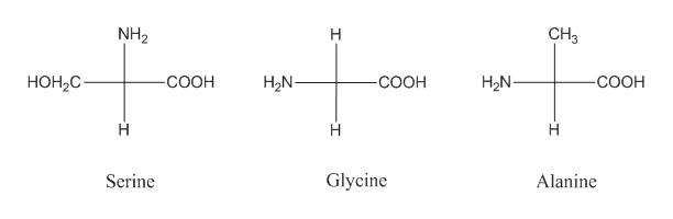 CH3 NH2 H НОН,С. COOH H2N -СООН H2N -СООН н H Glycine Serine Alanine