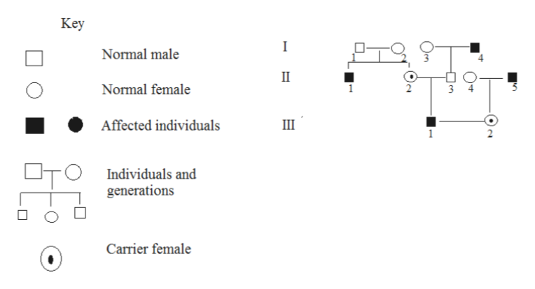 Key I Normal male II 3 4 Normal female 1 Affected individuals Ш 1 Individuals and generations Carrier female Oa