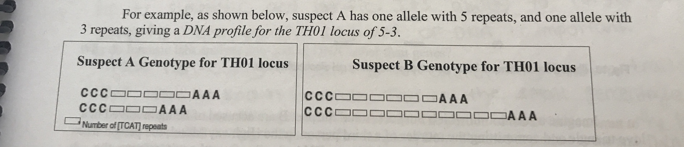 For example, as shown below, suspect A has one allele with 5 repeats, and one allele with 3 repeats, giving a DNA profile for the TH01 locus of 5-3. Suspect A Genotype for TH01 locus Suspect B Genotype for TH01 locus CCC AAA CCC CCC AAA CCC AAA AAA Number of [TCAT] repaats