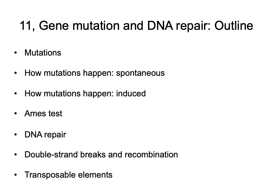 11, Gene mutation and DNA repair: Outline Mutations How mutations happen: spontaneous How mutations happen: induced Ames test DNA repair Double-strand breaks and recombination Transposable elements