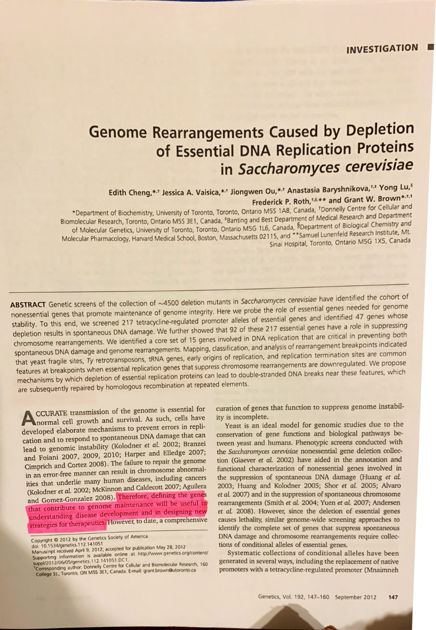 "INVESTIGATION Genome Rearrangements Caused by Depletion of Essential DNA Replication Prote ins in Saccharomyces cerevisiae Edith Cheng,* Jessica A. Vaisica, ** Jiongwen Ou,* Anastasia Baryshnikova,' Yong Lu, Frederick P. Roth,4.* and Grant W. Brown*.* Department of Biochemistry, University of Toronto, Toronto, Ontario M5S 1A8, Canada, 'Donnelly Centre for Cellular and Biomolecular Research, Toronto, Ontario M5S 3E1, Canada, *Banting and Best Department of Medical Research and Department of Molecular Genetics, University of Toronto, Toronto, Ontario M5G 1L6, Canada, SDepartment of Biological Chemistry and Molecular Pharmacology, Harvard Medical School, Boston, Massachusetts 02115, and *""Samuel Lunenfeld Research Institute, Mt. Sinai Hospital, Toronto, Ontario M5G 1X5, Canada ABSTRACT Genetic screens of the collection of ~4500 deletion mutants in Saccharomyces cerevisiae have identified the cohort of nonessential genes that promote maintenance of genome integrity. Here we probe the role of essential genes needed for genome stability. To this end, we screened 217 tetracycline-regulated promoter alleles of essential genes and identified 47 genes whose depletion results in spontaneous DNA damage. We further showed that 92 of these 217 essential genes have a role in suppressing chromosome rearrangements. We identified a core set of 15 genes involved in DNA replication that are critical in preventing both spontaneous DNA damage and genome rearrangements. Mapping, classification, and analysis of rearrangement breakpoints indicated that yeast fragile sites, Ty retrotransposons, tRNA genes, early origins features at breakpoints when essential replication genes that suppress chromosome rearrangements are down regulated. We propose mechanisms by which depletion of essential replication proteins can lead to double-stranded DNA breaks near these features, which are subsequently repaired by homologous recombination at repeated elements replication, and replication termination sites are common CCURATE transmission of the genome is essential for normal cell growth and survival. As such, cells have developed elaborate mechanisms to prevent errors in repli cation and to respond to spontaneous DNA damage that can lead to genomic instability (Kolodner et al. 2002; Branzei and Foiani 2007, 2009, 2010; Harper and Elledge 2007; Cimprich and Cortez 2008). The failure to repair the genome in an error-free manner can result in chromosome abnormal- ities that underlie many human diseases, including cancers (Kolodner et al. 2002; McKinnon and Caldecott 2007; Aguilera and Gomez-Gonzalez 2008). Therefore, defining the genes that contribute to genome maintenance will be useful in understanding disease development and in designing new strategies for therapeutics. However, to date, a comprehensive curation of genes that function to suppress genome instabil- ity is incomplete. Yeast is an ideal model for genomic studies due to the conservation of gene functions and biological pathways be- tween yeast and humans. Phenotypic screens conducted with the Saccharomyces cerevisiae nonessential gene deletion collec- tion (Giaever et al. 2002) have aided in the annotation and functional characterization of nonessential genes involved in the suppression of spontaneous DNA damage (Huang et al. 2003; Huang and Kolodner 2005; Shor et al. 2005; Alvaro et al. 2007) and in the suppression of spontaneous chromosome rearrangements (Smith et al. 2004; Yuen et al. 2007; Andersen et al 2008). However, since the deletion of essential genes causes lethality, similar genome-wide screening approaches to identify the complete set of genes that suppress spontaneous DNA damage and chromosome rearrangements require collec- tions of conditional alleles of essential genes. Systematic collections of conditional alleles have been generated in several ways, including the replacement of native promoters with a tetracycline-regulated promoter (Mnaimneh Copyright 2012 by the Genetics Society of America doi: 10.1534/genetics.112.141051 Manuscript received April 9, 2012; accepted for publication May 28, 2012 Supporting information is available online at http//www.genetics.org/content suppl/2012/06/05/genetics. 112.141051 DC1 'Corresponding author: Donnelly Centre for Cellular and Biomolecular Research, 160 College St, Toronto, ON MSS 3E1, Canada. E-mail: grant.brown@utoronto.ca Genetics, Vol. 192, 147-160 September 2012 147"