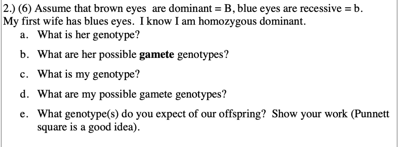 2.) (6) Assume that brown eyes are dominant = B, blue eyes are recessive = b My first wife has blues eyes. Iknow I am homozygous dominant. a. What is her genotype? b. What are her possible gamete genotypes? c. What is my genotype? d. What are my possible gamete genotypes? e. What genotype(s) do you expect of our offspring? Show your work (Punnett square is a good idea).