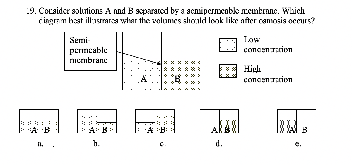 19. Consider solutions A and B separated by a semipermeable membrane. Which diagram best illustrates what the volumes should look like after osmosis occurs? Semi- Low concentration permeable membrane High concentration B a. b. c. d. e.