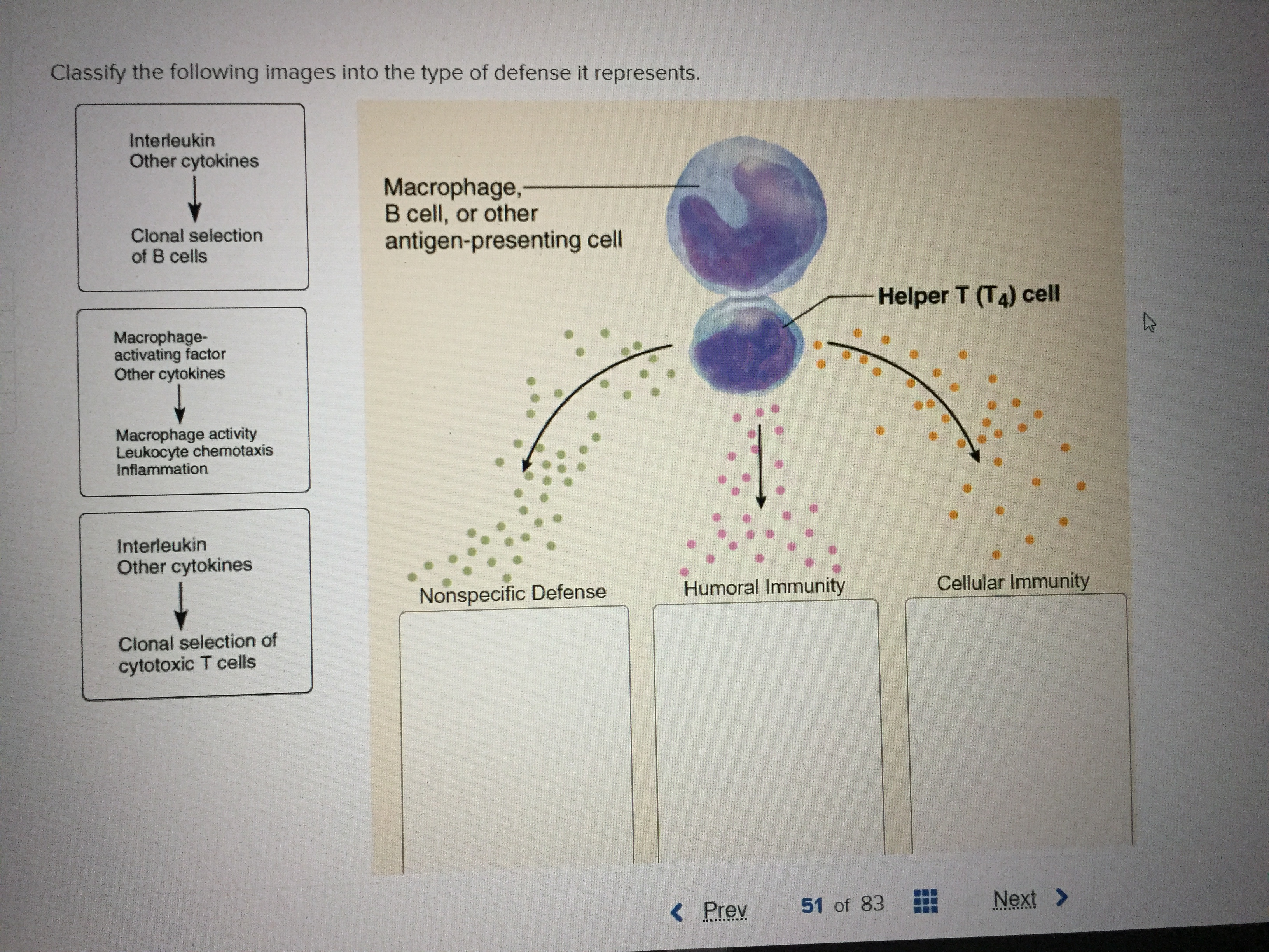 Classify the following images into the type of defense it represents. Interleukin Other cytokines Macrophage, B cell, or other antigen-presenting cell Clonal selection of B cells Helper T (T4) cell Macrophage- activating factor Other cytokines Macrophage activity Leukocyte chemotaxis Inflammation Interleukin Other cytokines Cellular Immunity Humoral Immunity Nonspecific Defense Clonal selection of cytotoxic T cells Next> 51 of 83 Prev