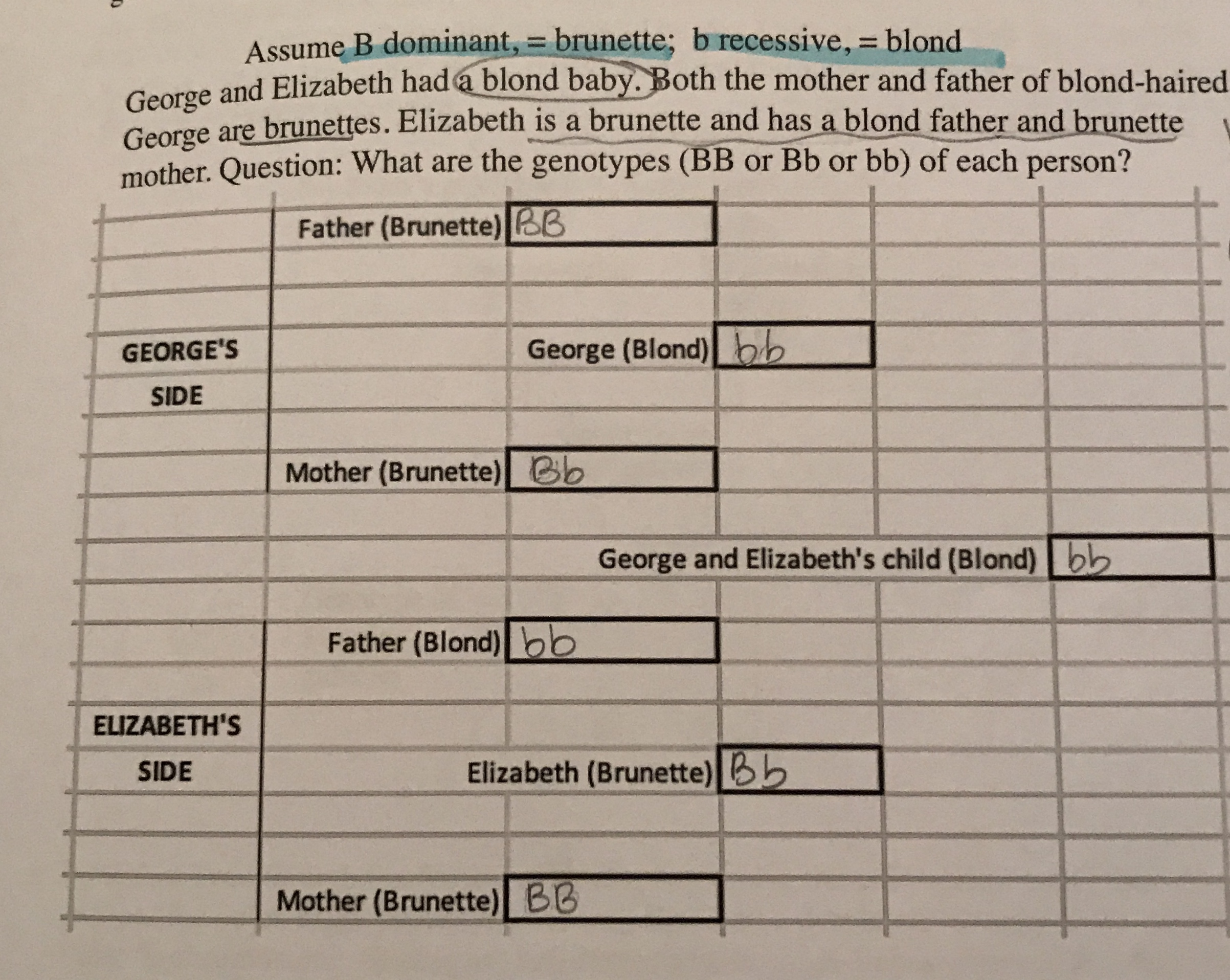 Assume B dominant, = brunette; b recessive, blond George and Elizabeth had a blond baby. Both the mother and father of blond-haired George are brunettes. Elizabeth is a brunette and has a blond father and brunette mother. Question: What are the genotypes (BB or Bb or bb) of each person? Father (Brunette) BB George (Blond)bb GEORGE'S SIDE Mother (Brunette)Bb George and Elizabeth's child (Blond)bb Father (Blond)bb ELIZABETH'S Elizabeth (Brunette)b SIDE Ве Mother (Brunette) BB