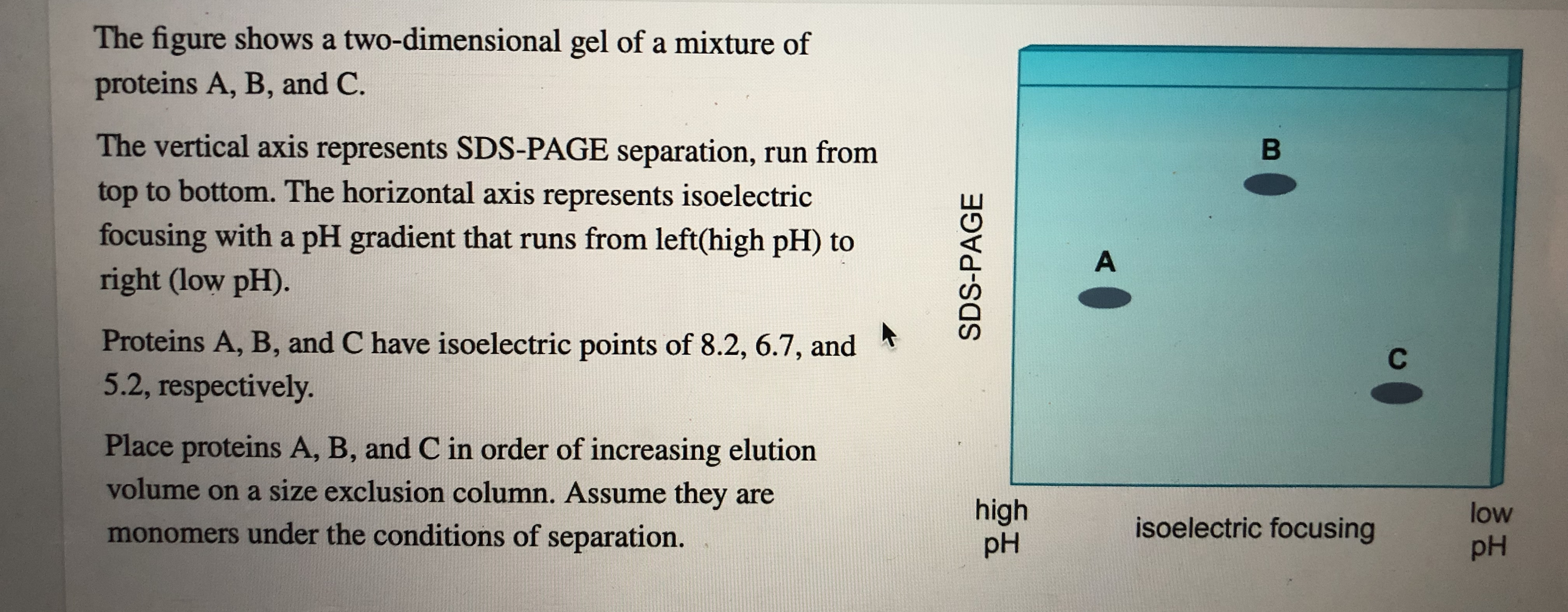 The figure shows a two-dimensional gel of a mixture of proteins A, B, and C. The vertical axis represents SDS-PAGE separation, run from top to bottom. The horizontal axis represents isoelectric focusing with a pH gradient that runs from left(high pH) to right (low pH). В A Proteins A, B, and C have isoelectric points of 8.2, 6.7, and 5.2, respectively. С Place proteins A, B, and C in order of increasing elution volume on a size exclusion column. Assume they are high pH low isoelectric focusing monomers under the conditions of separation. pH SDS-PAGE