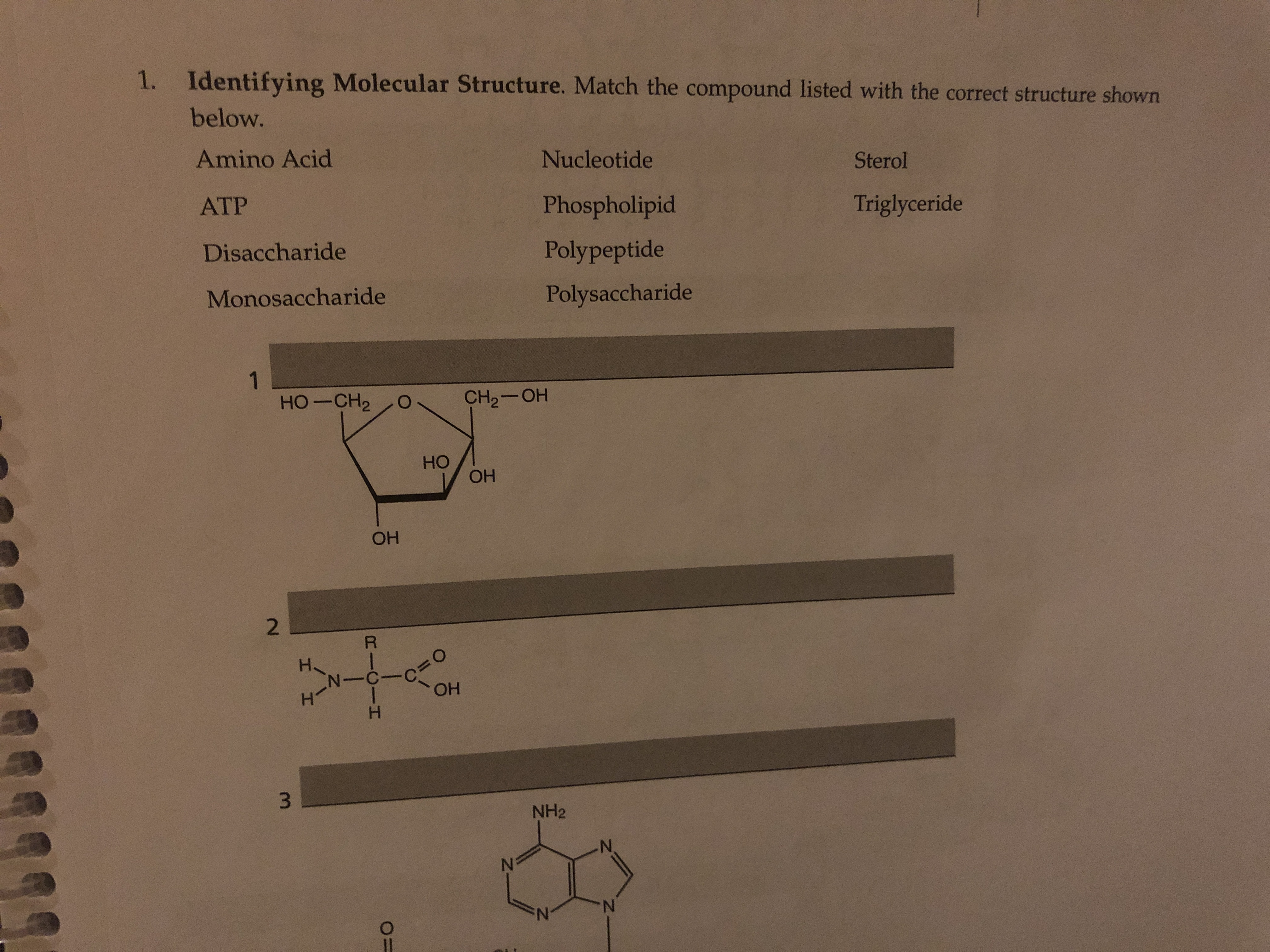 Identifying Molecular Structure. Match the compound listed with the correct structure shown 1. below. Amino Acid Nucleotide Sterol Triglyceride Phospholipid ATP Polypeptide Disaccharide Polysaccharide Monosaccharide 1 HO-CH2 CH2-OH Но ОН ОН 2 ОН 3. NH2 N. RICIH