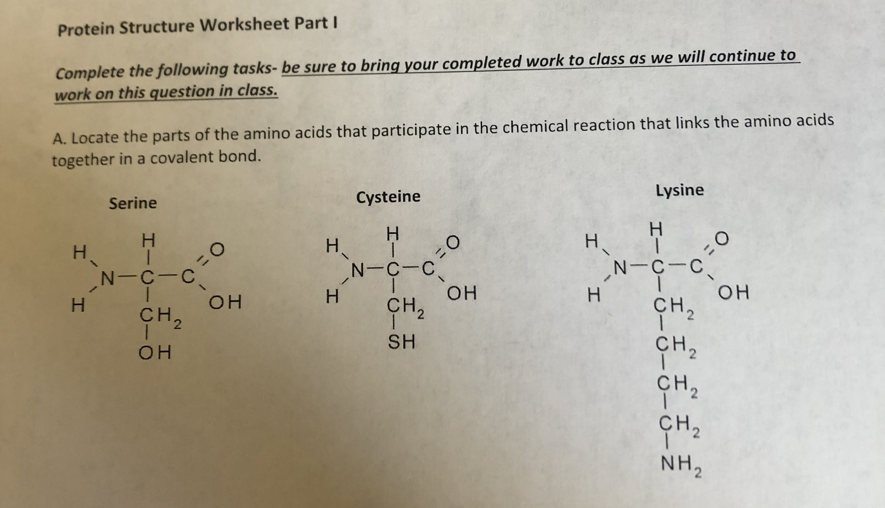Protein Structure Worksheet PartI Complete the following tasks- be sure to bring your completed work to class as we will continue to work on this question in class. A. Locate the parts of the amino acids that participate in the chemical reaction that links the amino acids together in a covalent bond. Lysine Cysteine Serine Н H. H 11 N-C-C он сн, =0 N-C-C I Н OH H ҫH, Он Cн, 2 2 SH ҫн, OH сн, ҫн, NH2 2 2 I I - C- N I-C-CIC- I I O- I I /\