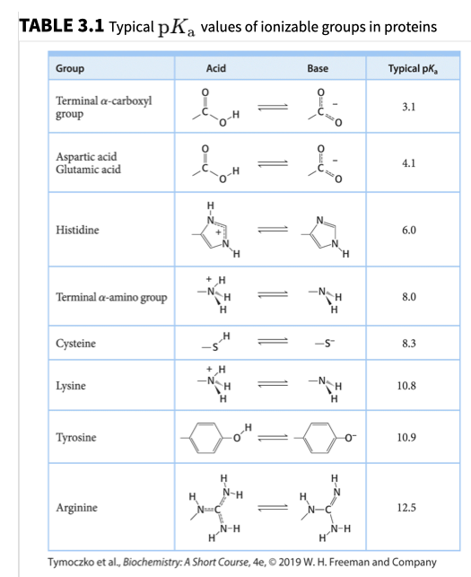 TABLE 3.1 Typical pKa values of ionizable groups in proteins Group Base Typical pk, Acid Terminal a-carboxyl group 3.1 Aspartic acid Glutamic acid 4.1 H н Histidine 6.0 H H -N H -N H Terminal a-amino group 8.0 н H S Cysteine 8.3 H -N H -N TH н Lysine 10.8 Н H о Тугosine 10.9 н N-H HJ Н Arginine 12.5 N-H н N-H H Tymoczko et al., Biochemistry: A Short Course, 4e,O 2019 W. H. Freeman and Company
